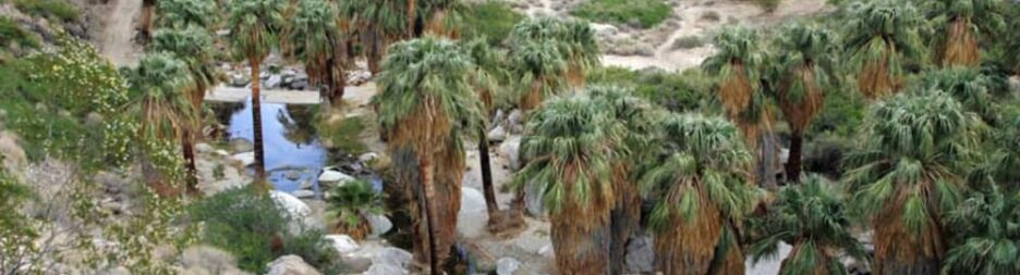 4 Best Oasis's in Palm Springs, THE WESTCOTT